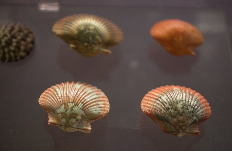 Seashells from the Marine Biology permanent exhibition. | Courtesy: The Goulandris Museum of Natural History